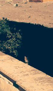 Gato en El cementerio de San José.