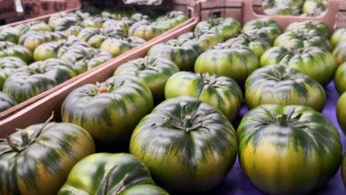 Photo of Tomate de Almería, un alimento 10 para la salud