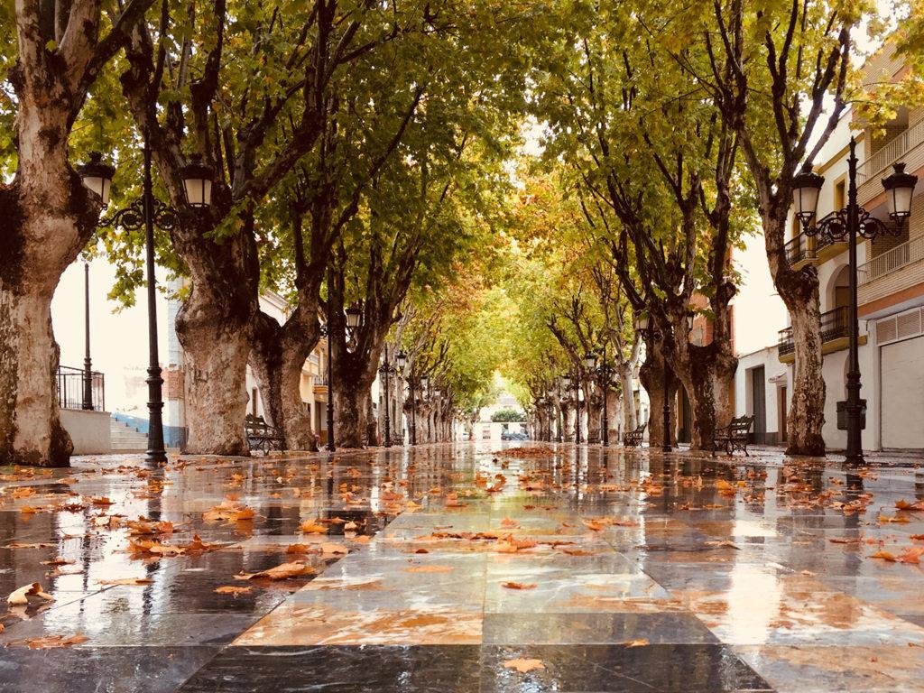 Paseo Cervantes de Berja en otoño