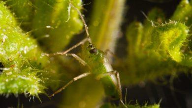 Photo of Objetivo 'I Love Bichos': que el 100%  de agricultores utilicen el control biológico contra las plagas