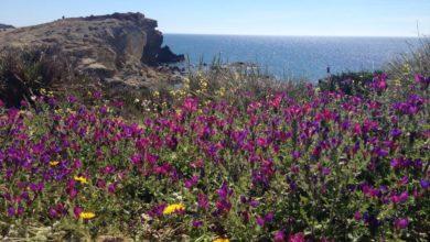Photo of De veraneo en Almería: Viajes, deporte, playa y piscina con la copa menstrual