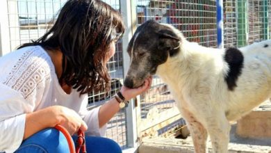 refugio canino la Reserva La Mojonera