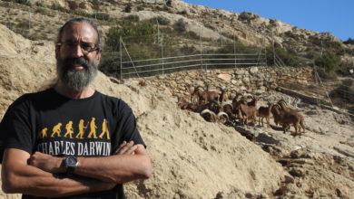 Photo of El arruí en Almería ¿Especie invasora o vulnerable?